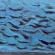 Vogels 3, acryl 50 x 37 cm