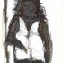 Vrouw 65 - houtskool, 25 x 20 cm