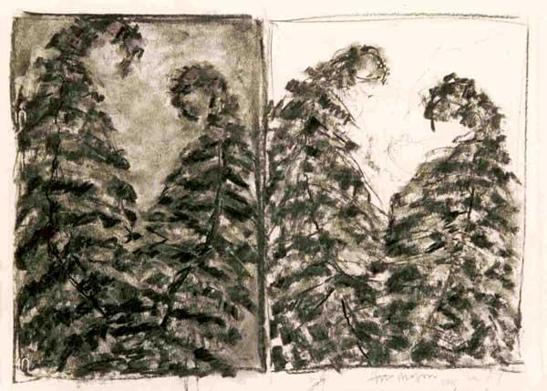 Varens - houtskool, 37 x 50 cm
